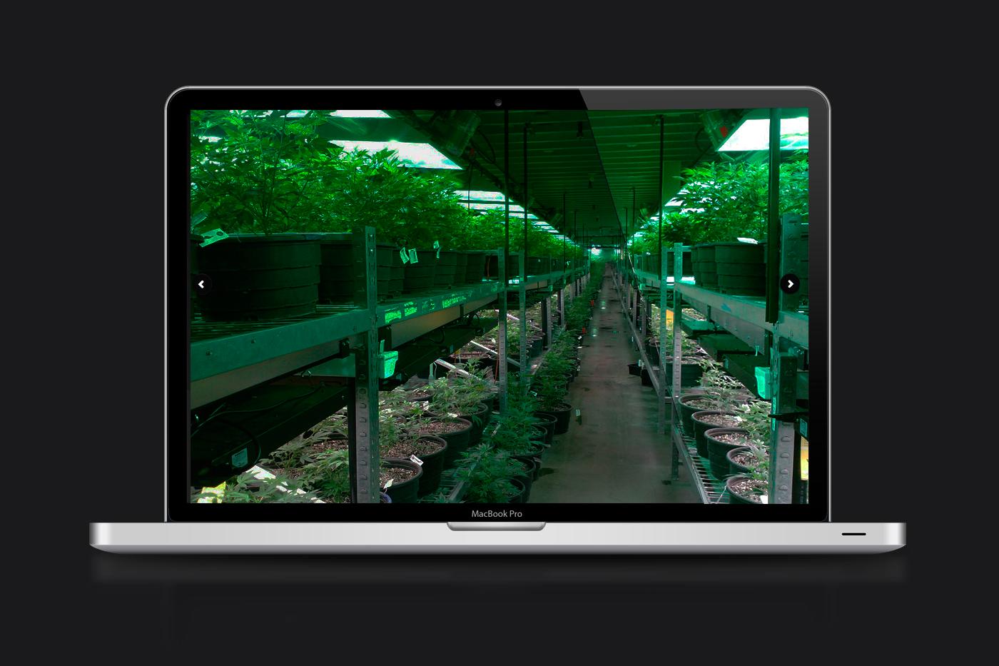 iluminar planta marihuana